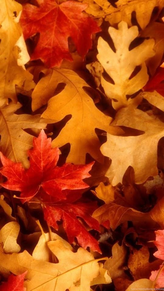 Картинки осень для мобильного эти