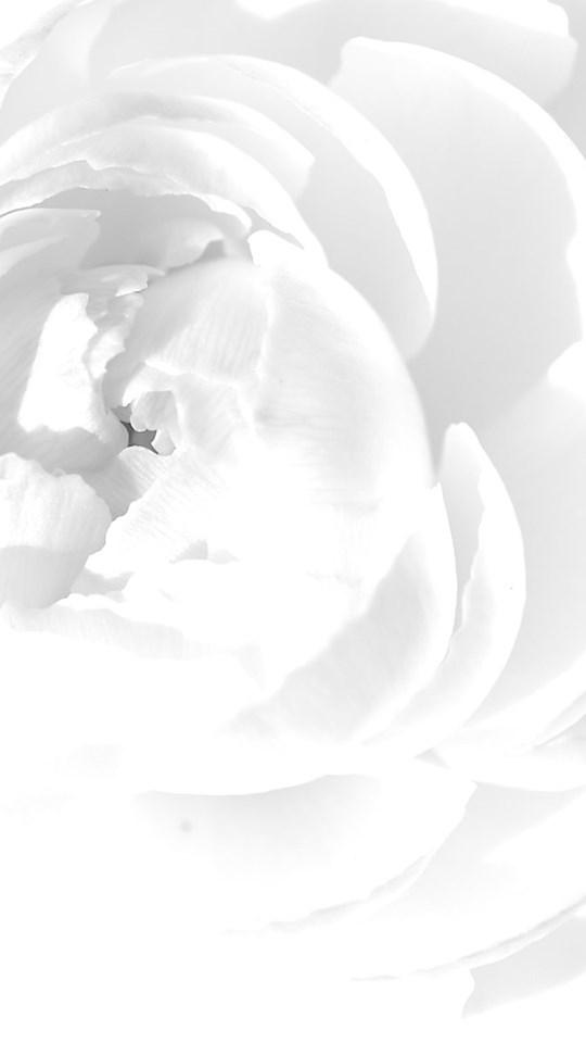 Cool White Backgrounds Desktop Background