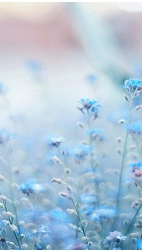 Blue Flowers Tumblr Wallpapers Desktop Background