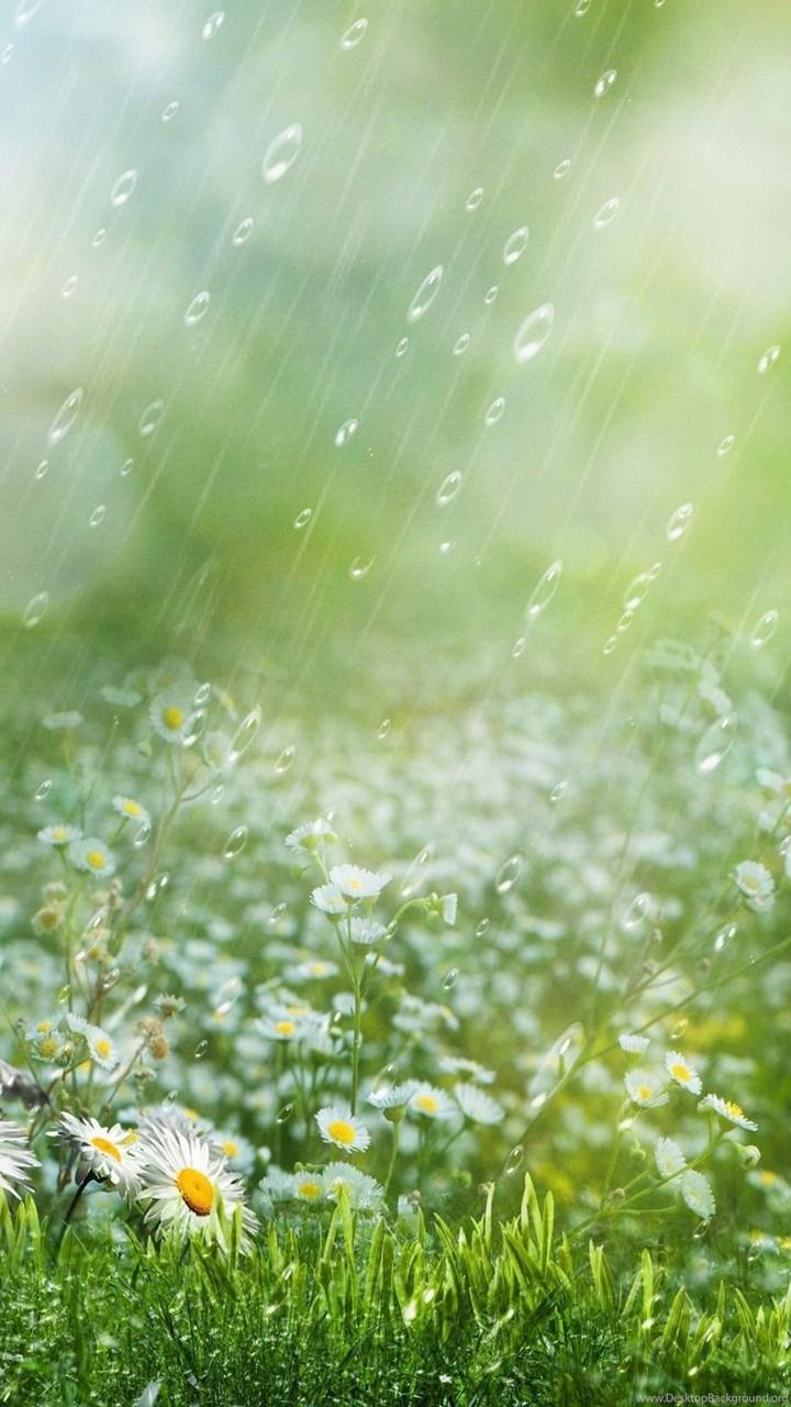 Summer Rain HD Wallpaper, Summer Rain Images, New ...