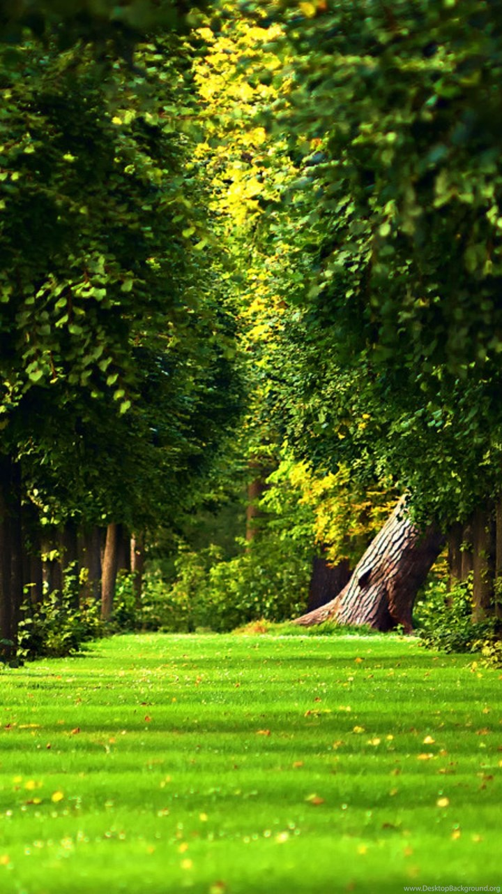 Beautiful Green Path In The Forest Hd Nature Wallpaper 5120x3200 Jpg