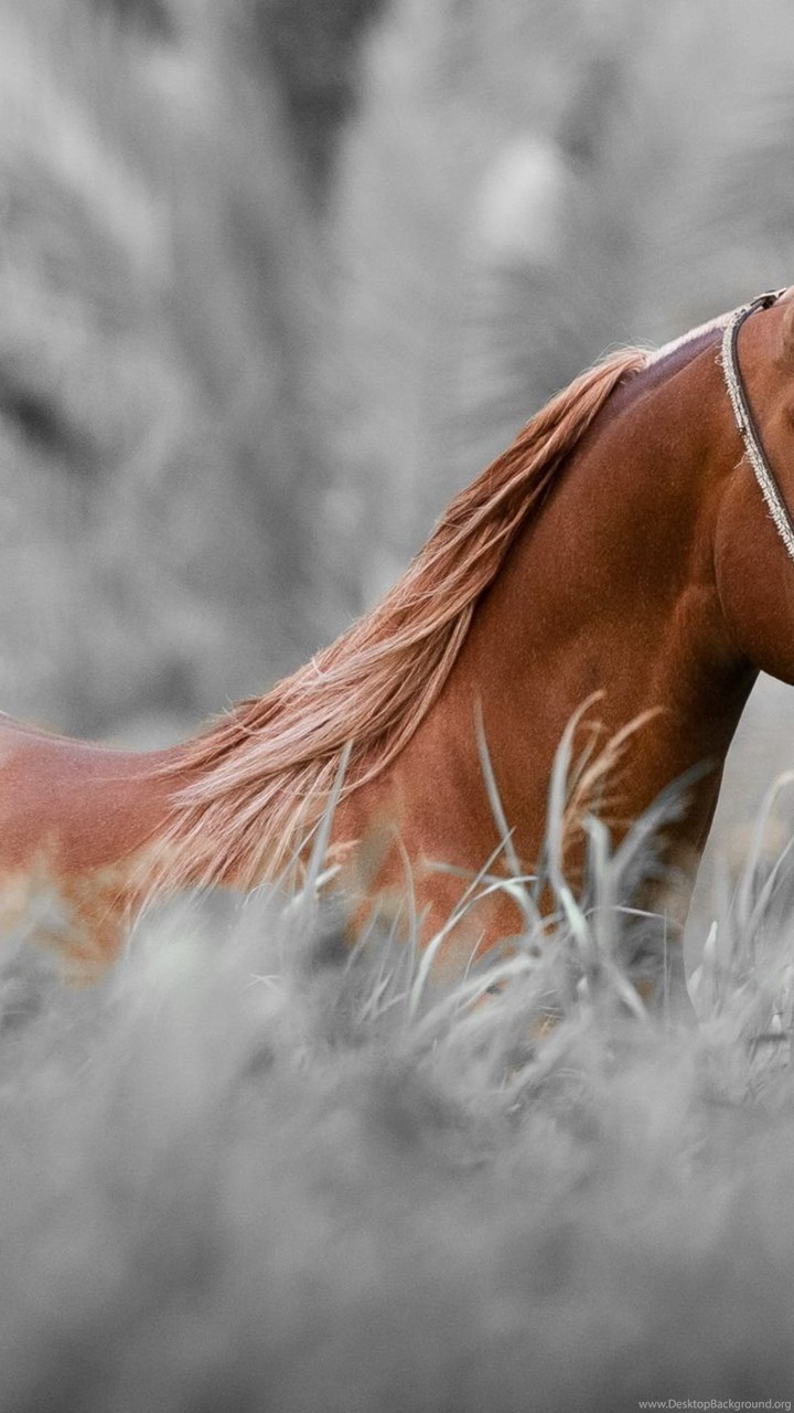 2014 Red Horse Hd Wallpapers Desktop Background