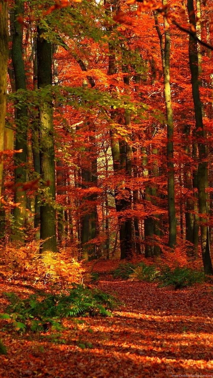 4k Ultra Hd Autumn Wallpapers Hd Desktop Backgrounds 3840x2160 Desktop Background