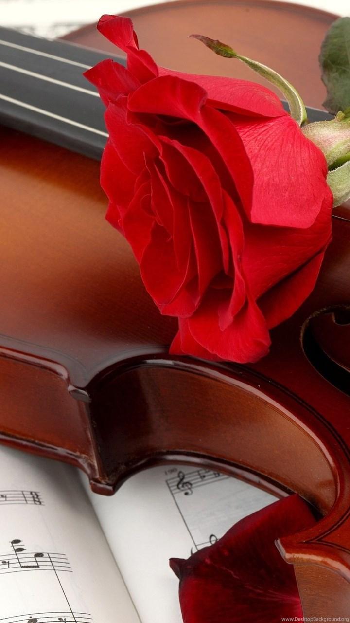 Violin Rose Wallpapers Full Hd Desktop Background
