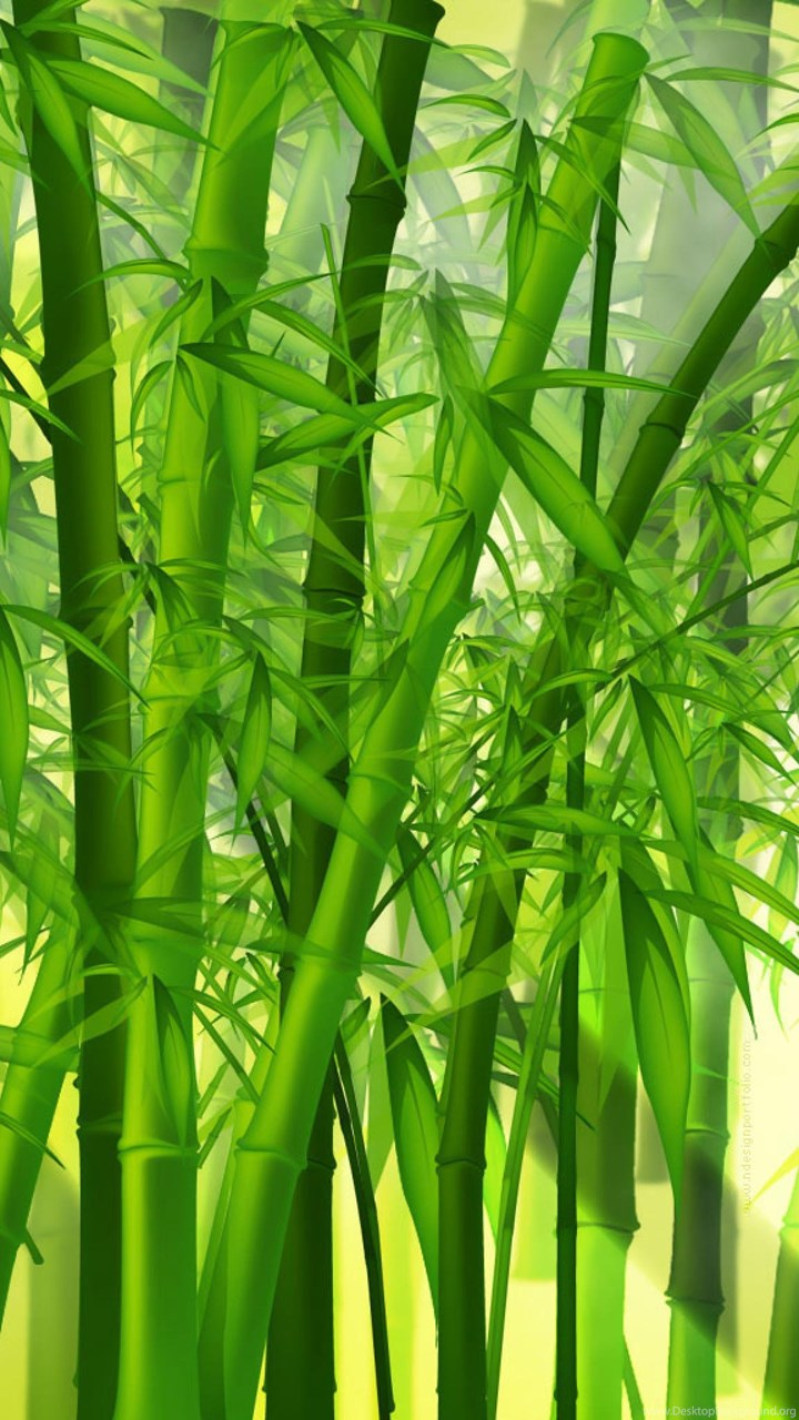 green bamboo forest wallpaper hd desktop background