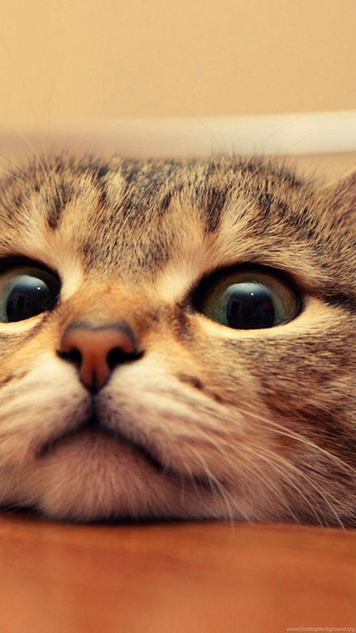 Curious Kitty Cat Hd Wallpapers Desktop Background