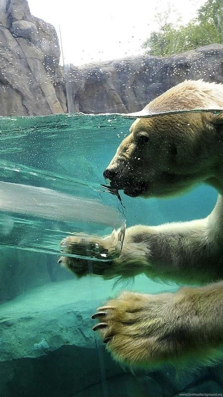 Download Wallpapers 3840x2160 Polar Bear Underwater Swim Baby 4k