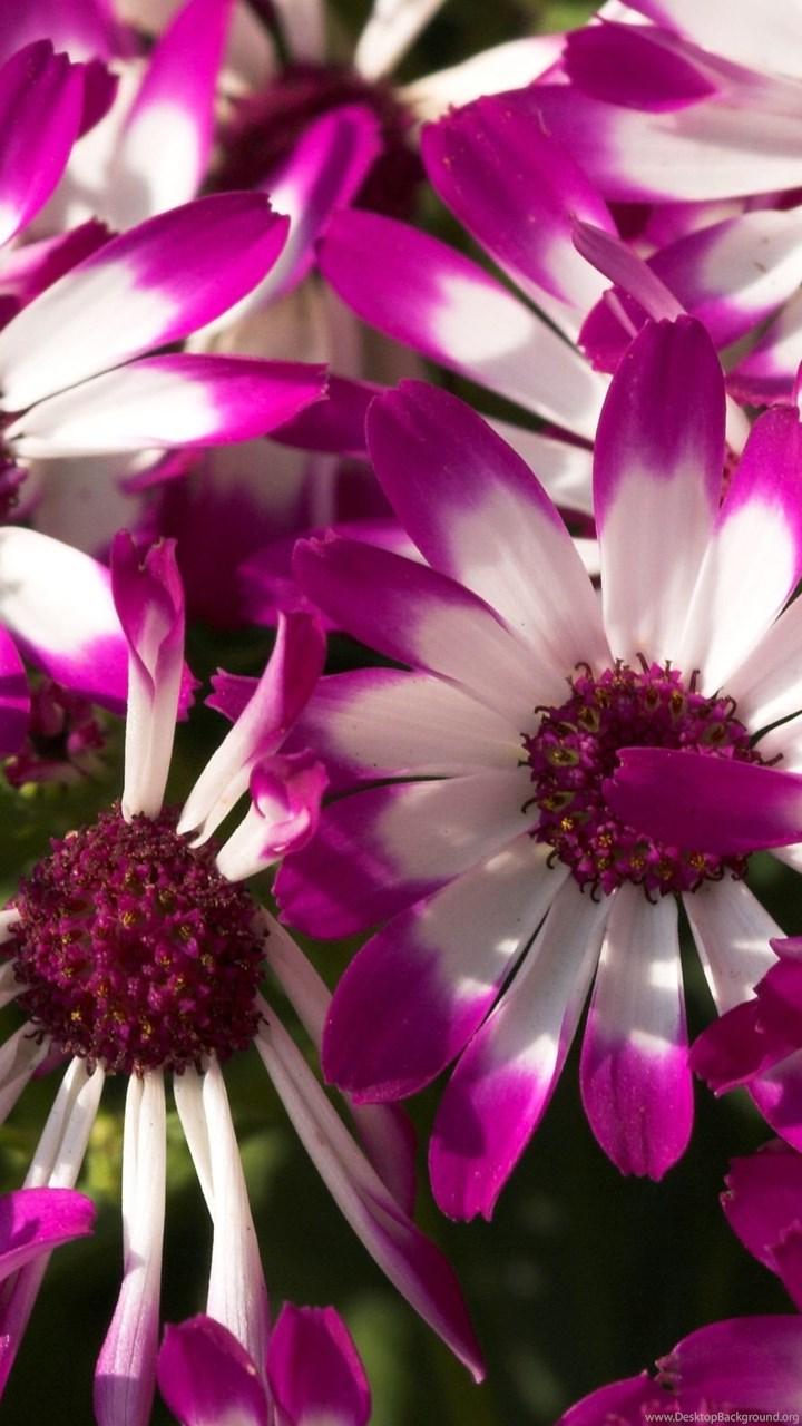 Pretty Purple Flowers Wallpapers Desktop Background