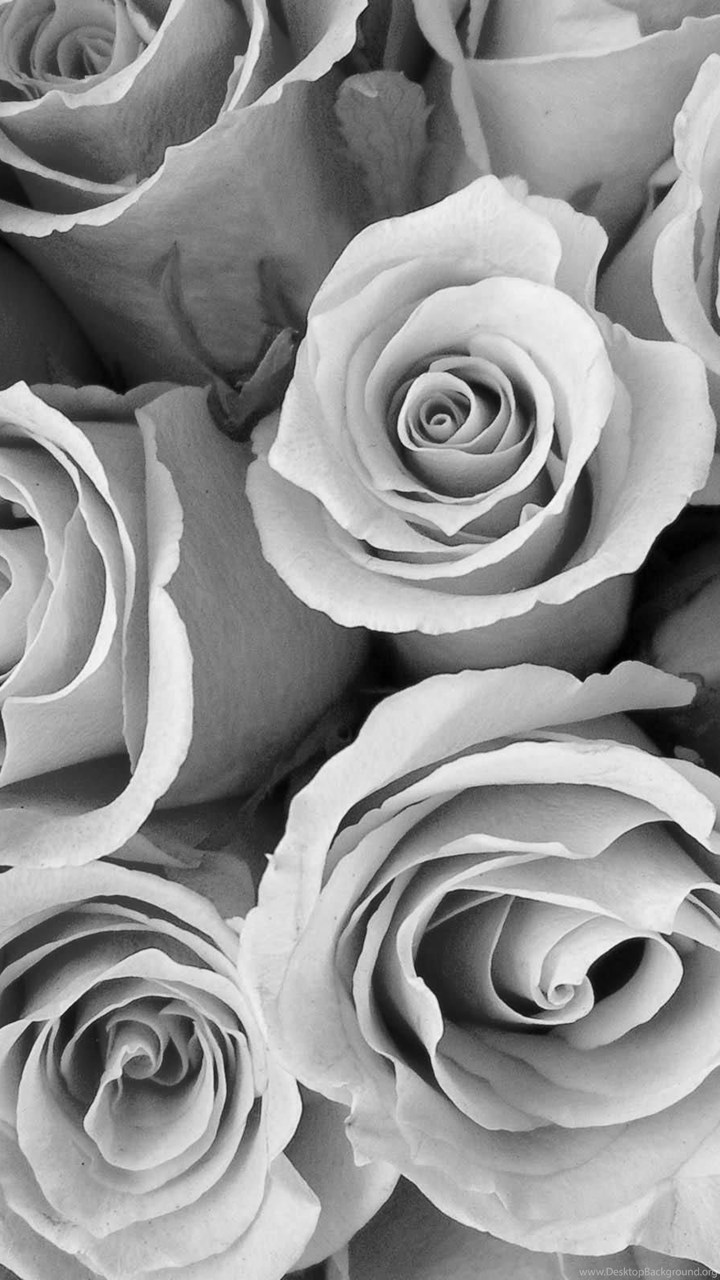 Flowers black and white special pink roses wallpaper black and fullscreen voltagebd Image collections