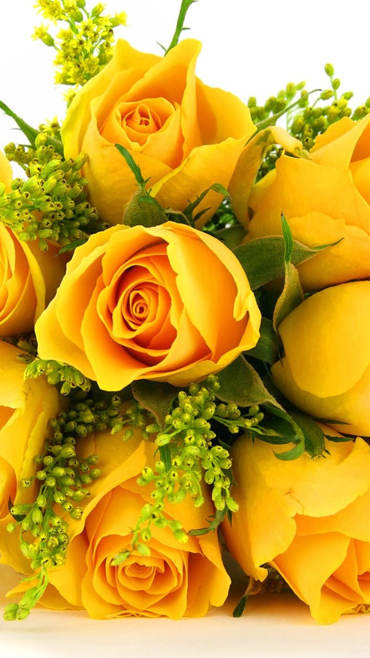 Yellow Rose Backgrounds Desktop Background