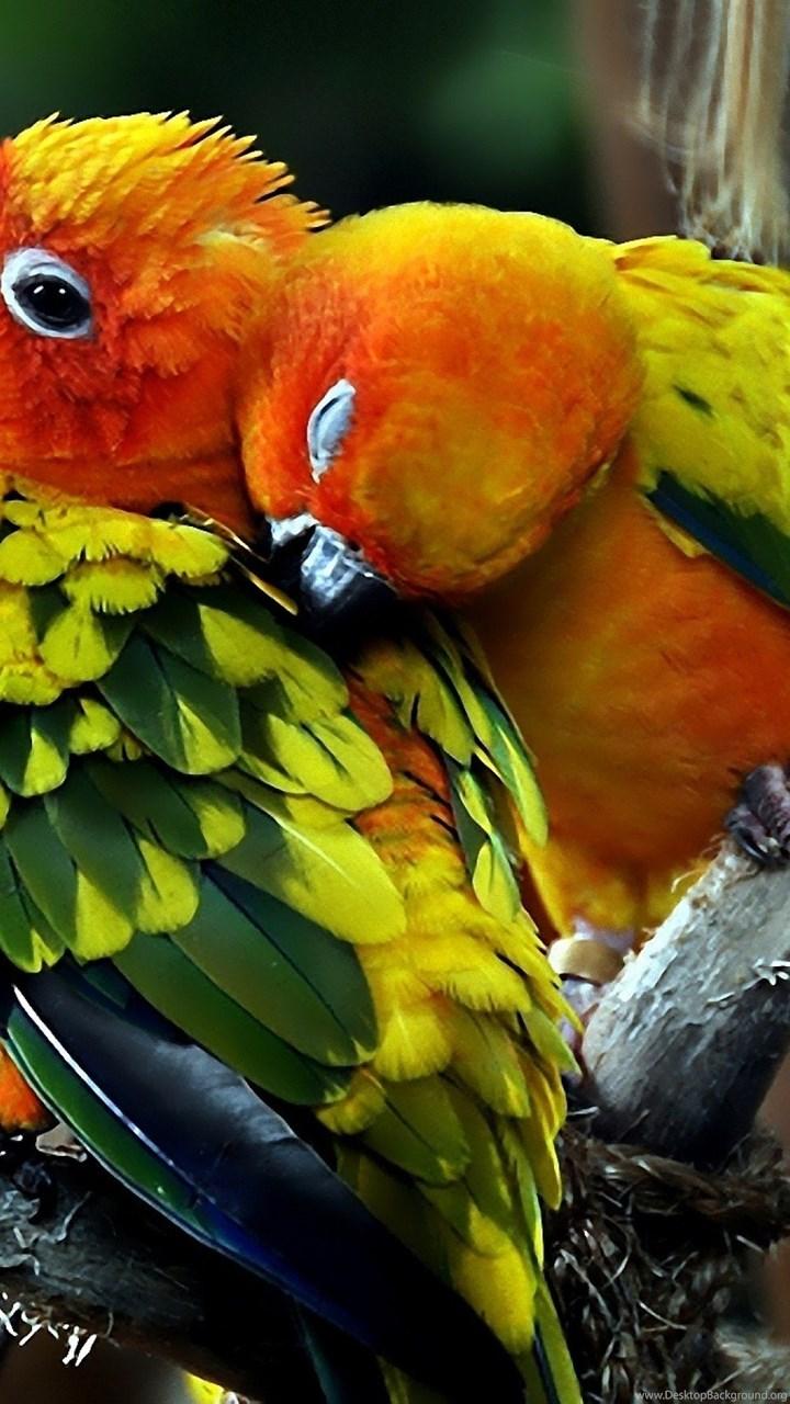 love bird wallpapers hd animal wallpapers rakaruan com desktop