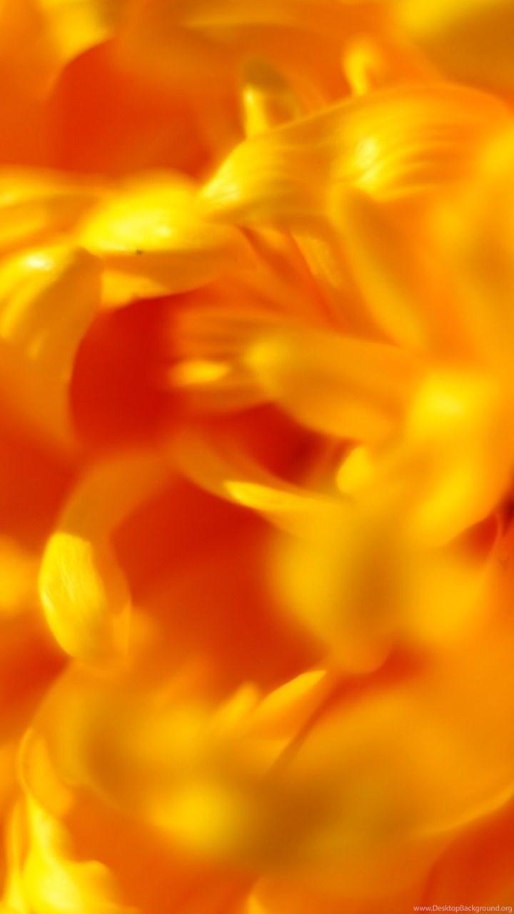 2560x1440 Nature Wallpaper WQHD 1440p Wide Quad HD 169