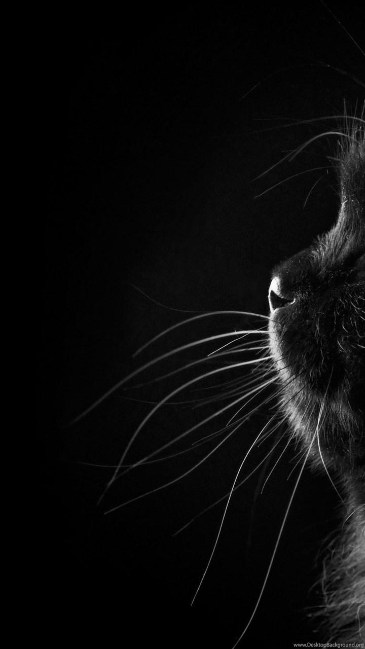 Black Persian Cat Wallpapers Hd Free Download For Desktop Desktop Background