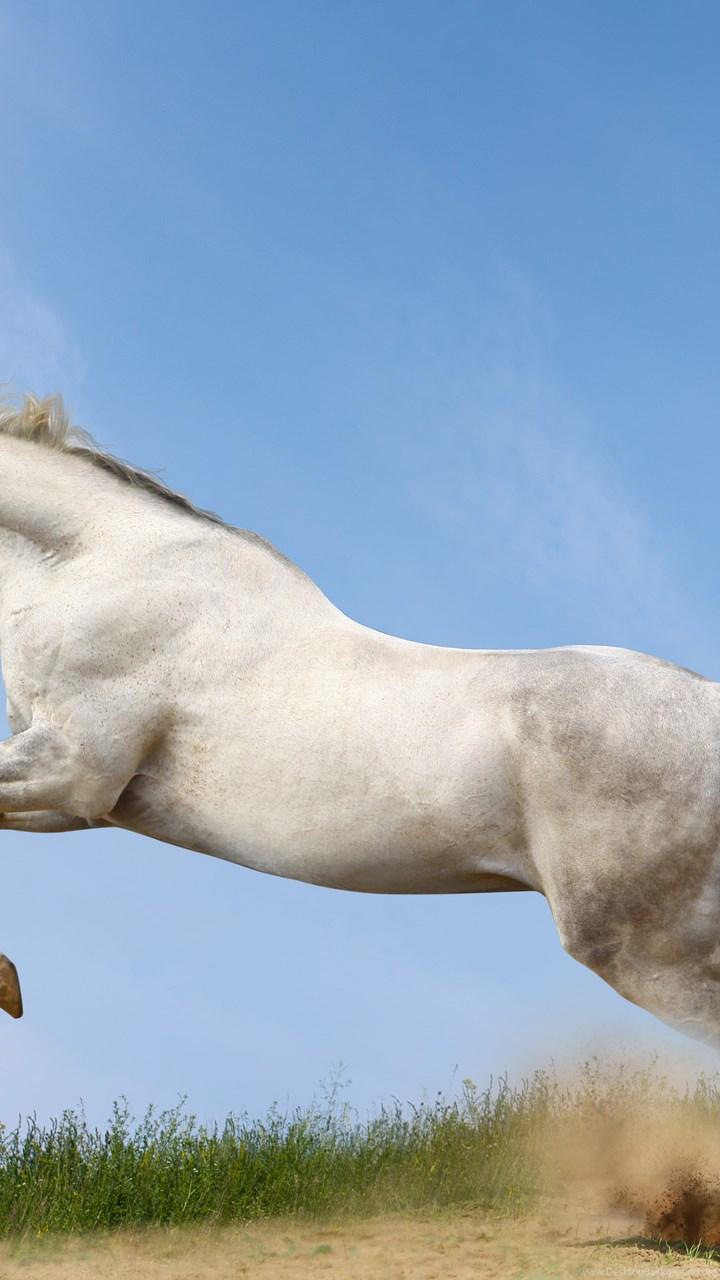 Horses run animals horse wallpapers desktop background fullscreen voltagebd Image collections