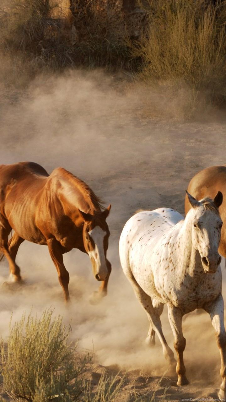 Horses wallpapers 2 desktop background fullscreen voltagebd Image collections