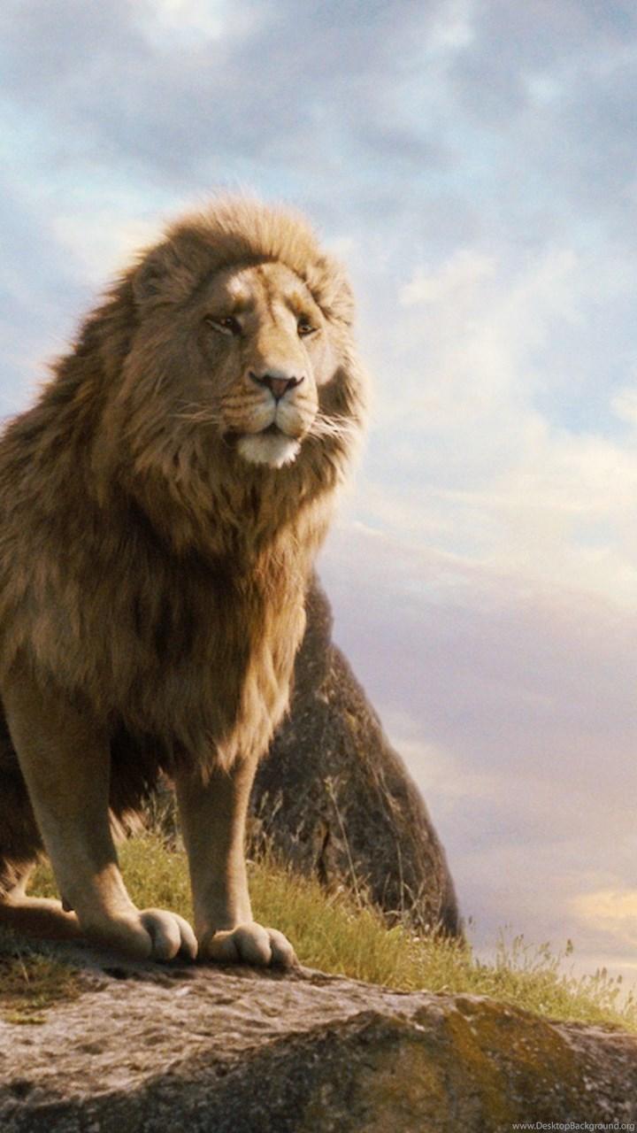 narnia lion aslan wallpapers desktop background