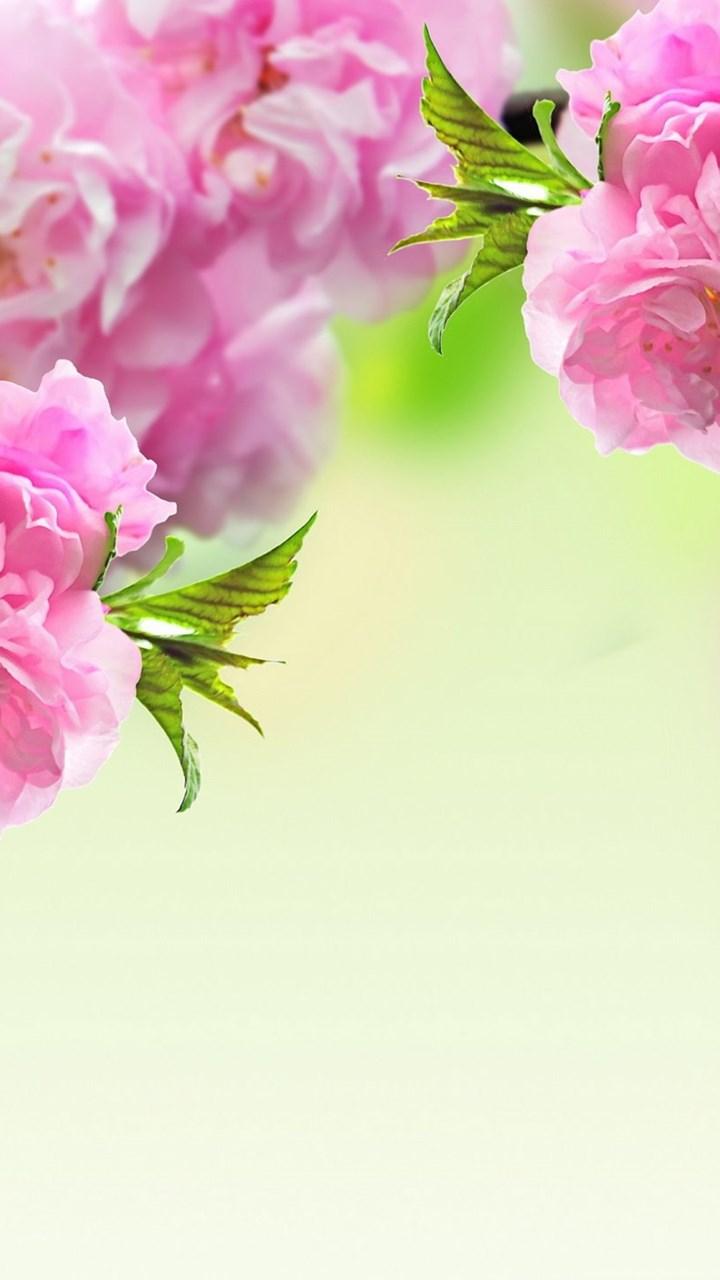 Spring flowers wallpapers flower wallpaper backgrounds hd desktop fullscreen mightylinksfo