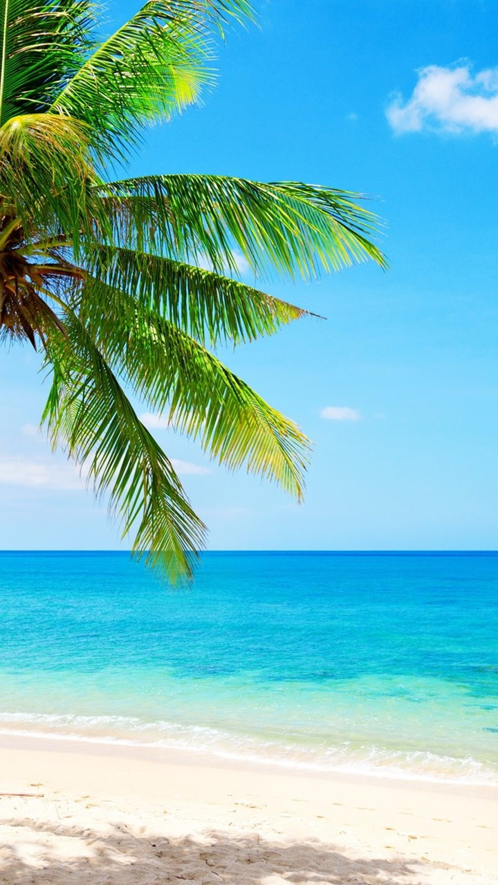 lonely palm tree tropical beach coast sea wallpapers