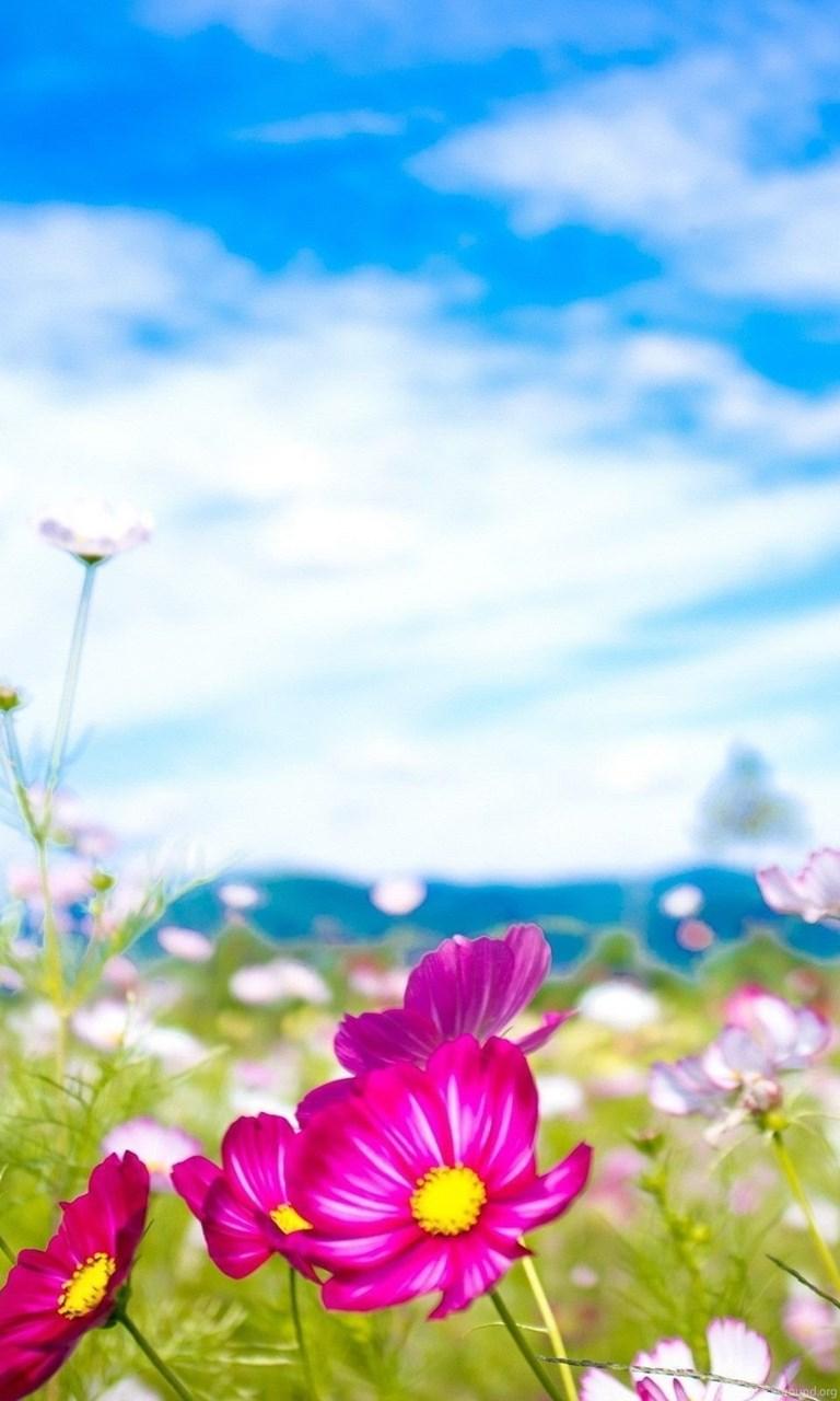 сожалению, везде картинки весна лето обои на айфон будет висеть