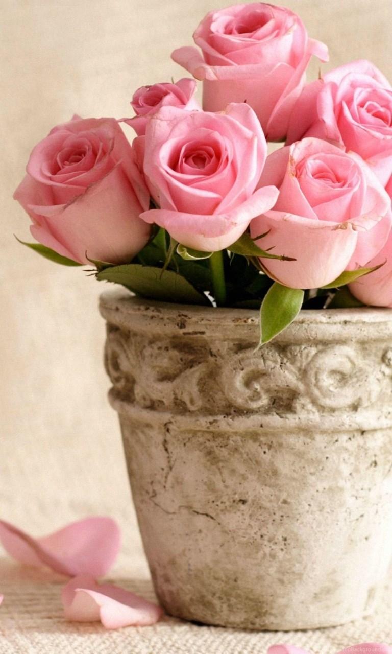 1080x1920 Rose Flowers Wallpapers HD Desktop Background