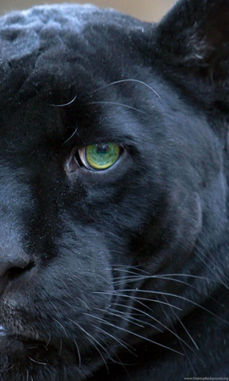 Black Panthers Green Eyes 3840x2160 4K 169 Ultra HD
