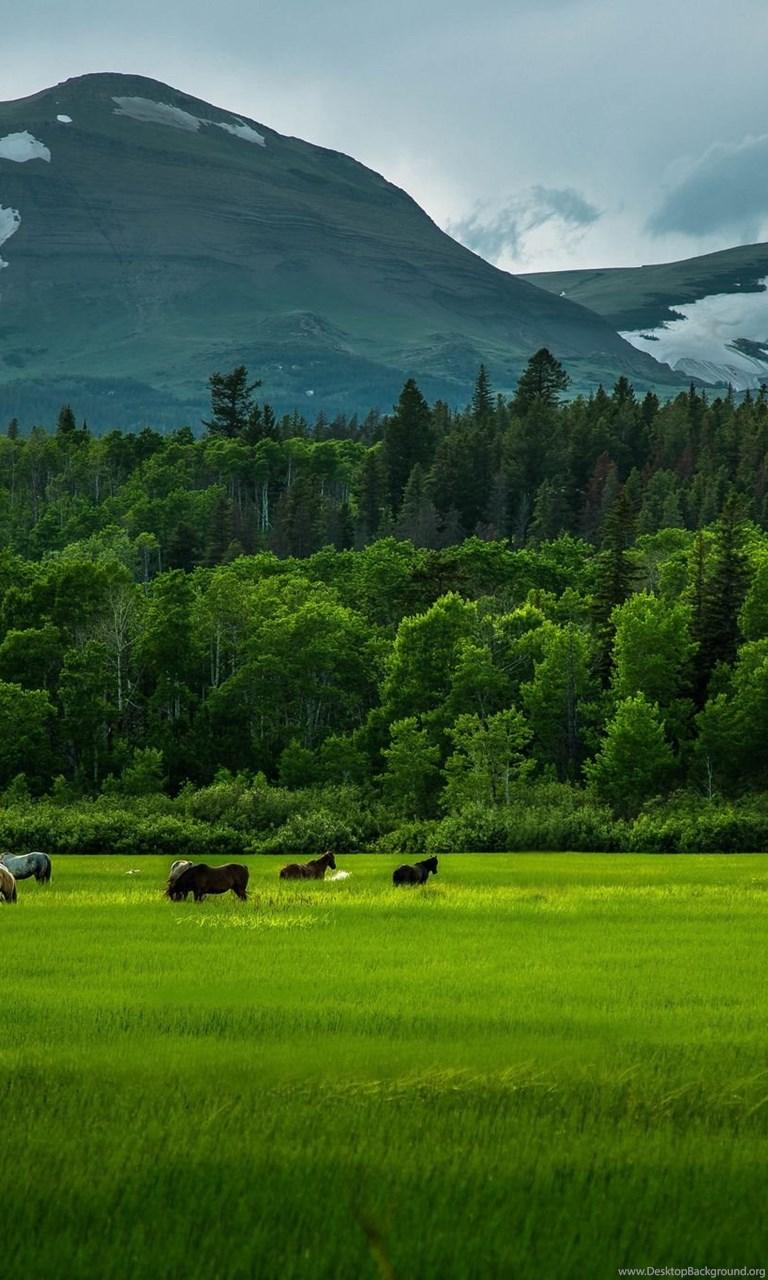 394693 beautiful fields green mountain trees hd