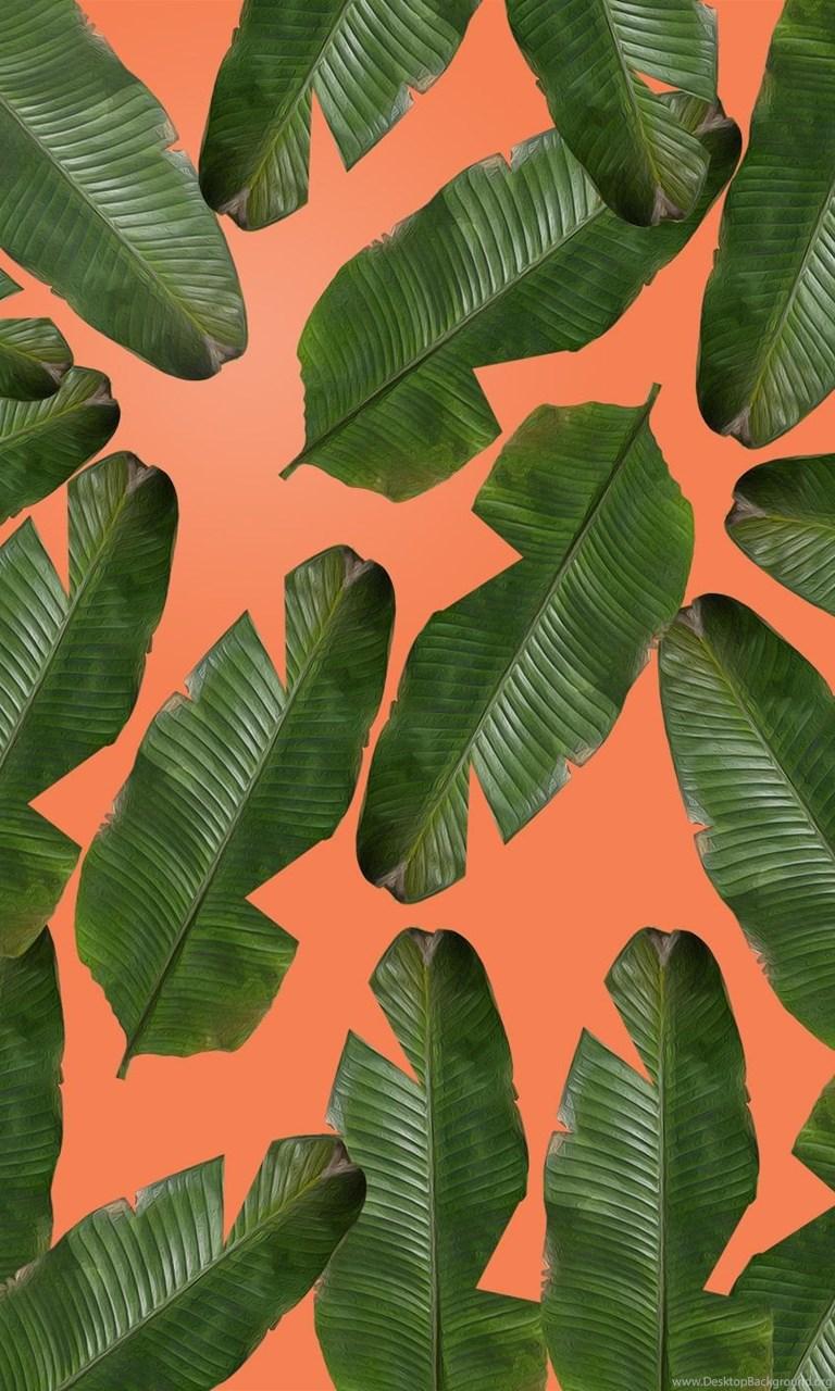 Banana Leaf Wallpapers Desktop Background