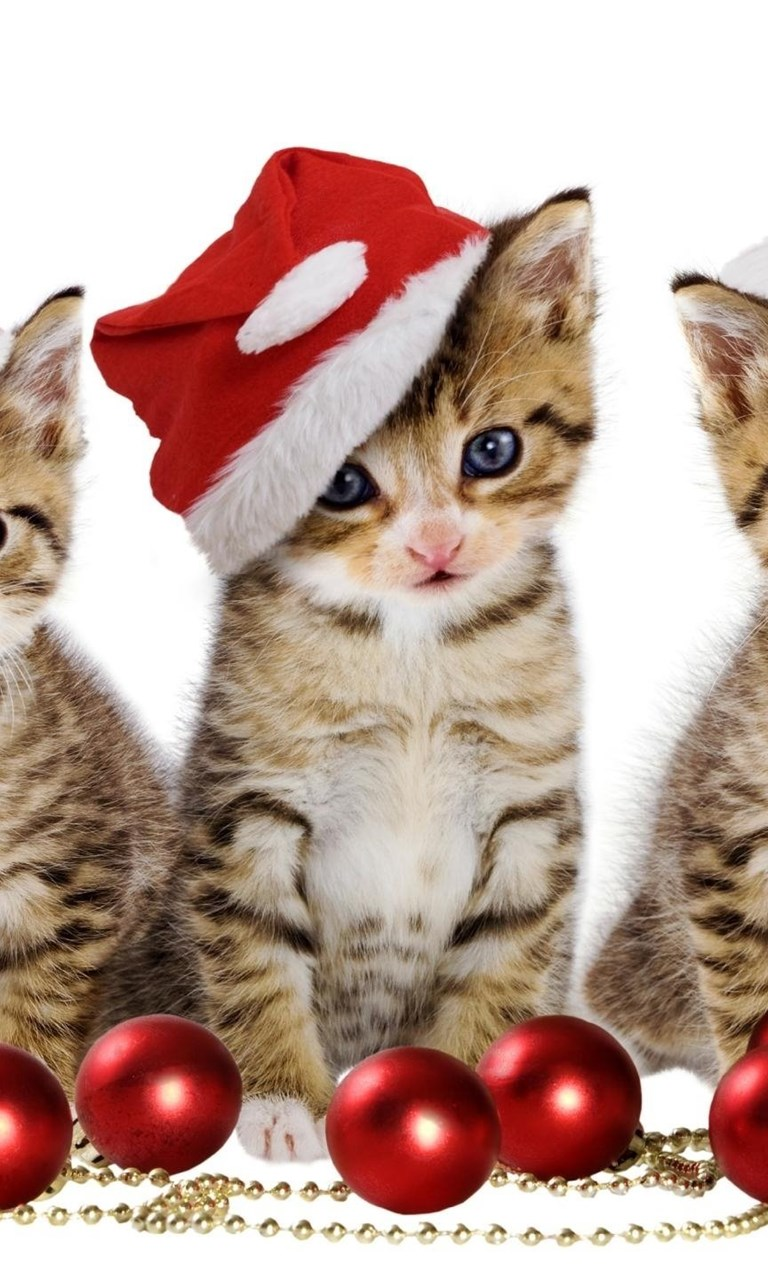 cute christmas kittens by the decorations wallpapers