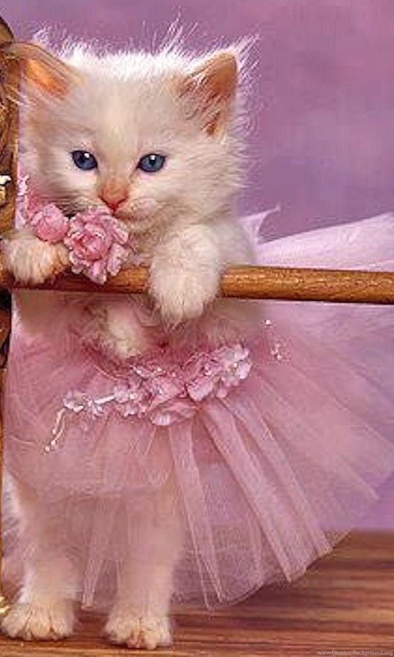 Cats: Share Tutu Cat Sweet Cute Desktop ...