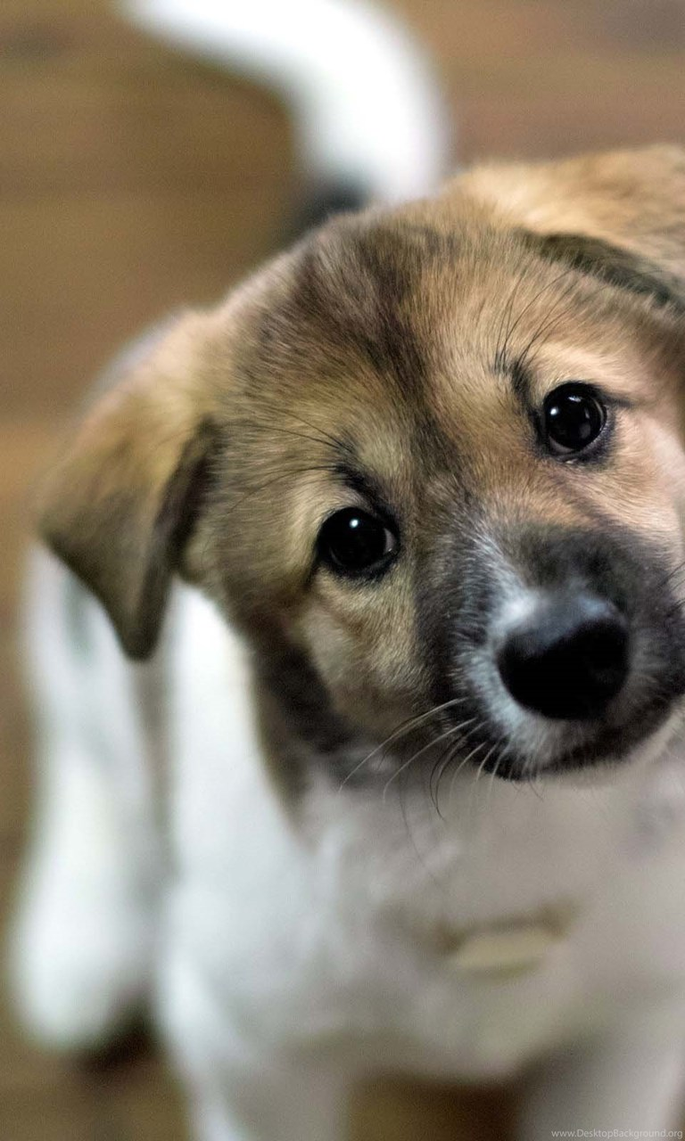 Cute Dogs Wallpapers Cute Puppies Hd Wallpapers Petpictures Desktop Background