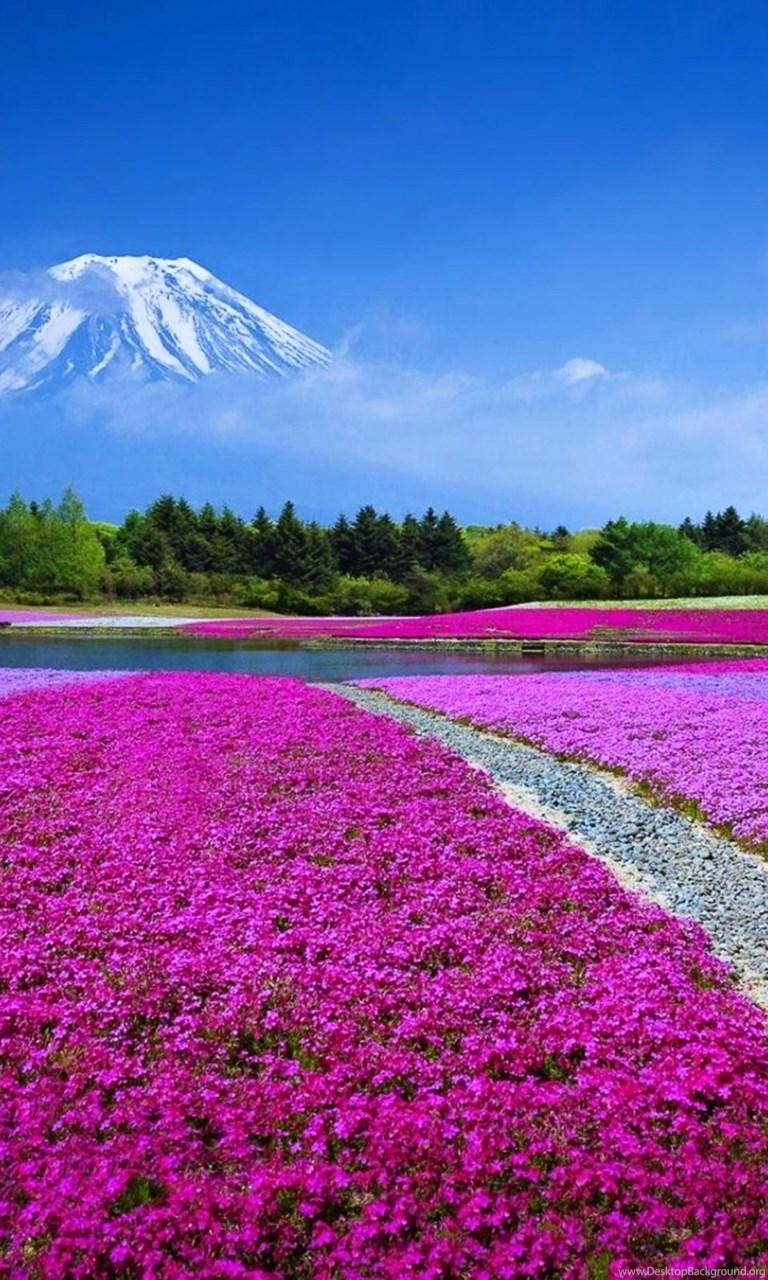 Kyoto japan sakura wallpapers hd of beautiful landscape - Sakura desktop ...