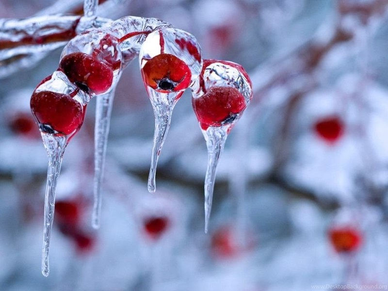Winter Nature Wallpaper Desktop Hd Winter Nature