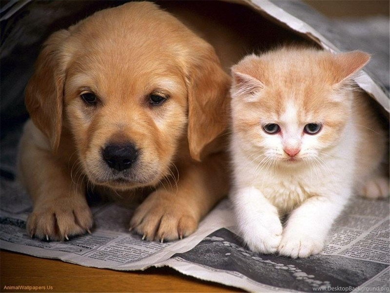 Cute Baby Kittens And Puppies 11233 Hd Wallpapers Powerballforlife Desktop Background
