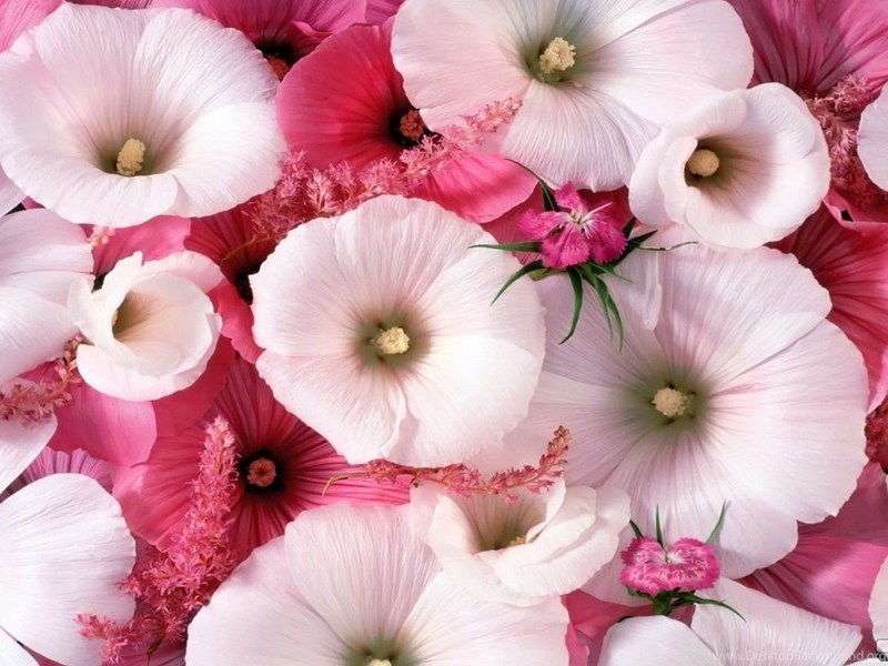 Beautiful flowers wallpapers download hd wallpapers lovely desktop widescreen voltagebd Image collections