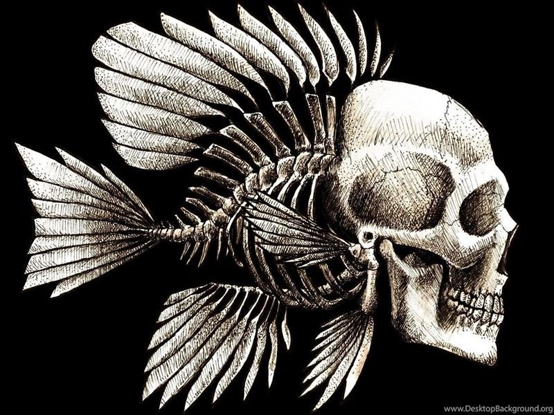 Bone Fish Skull HD Wallpapers Desktop Background