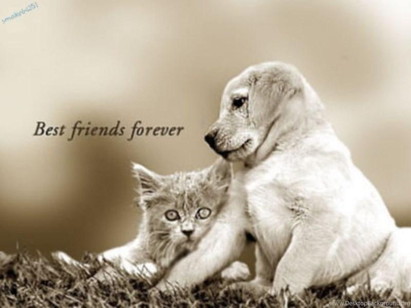 Best Friends Forever Wallpapers Desktop Background