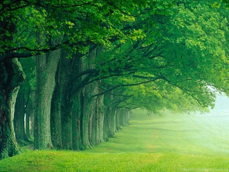 World Visits: Green Forest Best Wallpaper Images Desktop