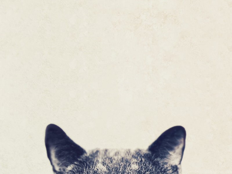 Cool Cat Glasses Iphone 6 Plus Hd Wallpapers Ipod Wallpapers Hd Desktop Background