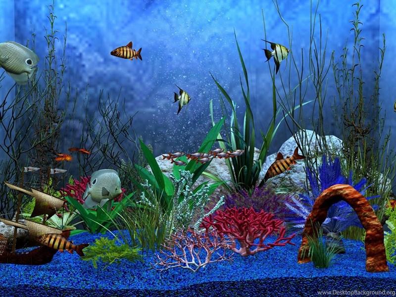 hd aquarium fish tank computer wallpapers full size