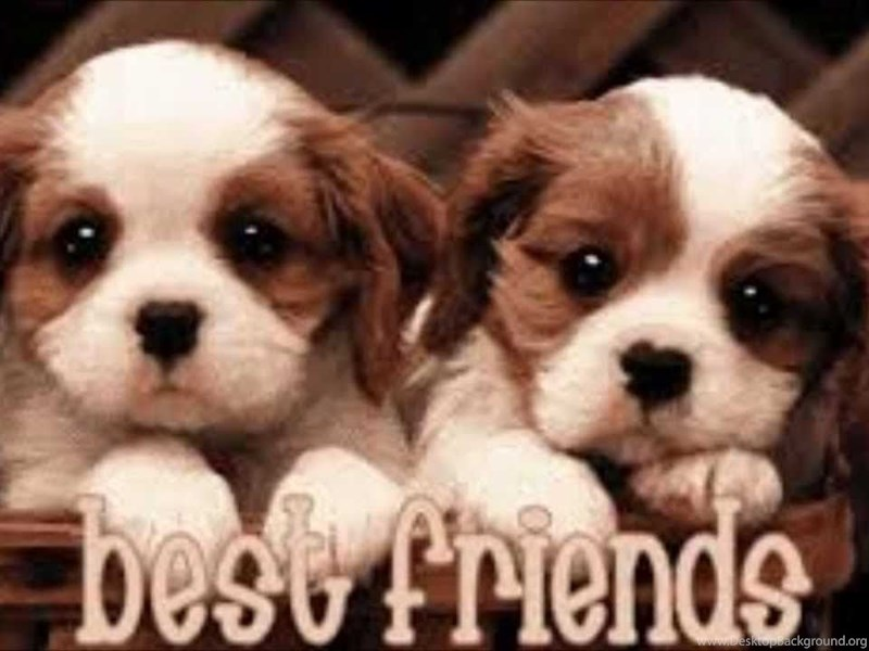 Best Friends Forever Wallpapers Cave Desktop Background