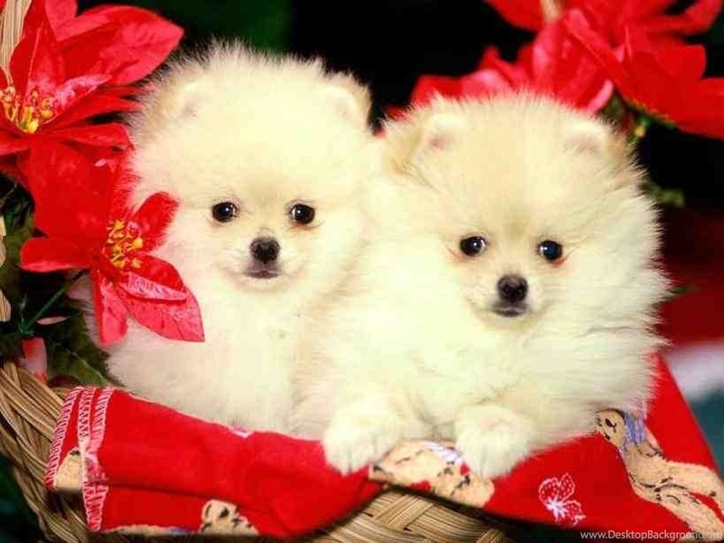 christmas puppies and kittens wallpapers ngising club desktop