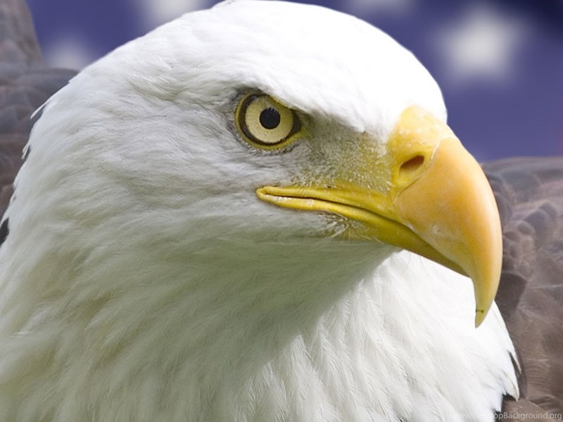 Originalbald Eagle Usa Iphone Wallpapers Backgrounds