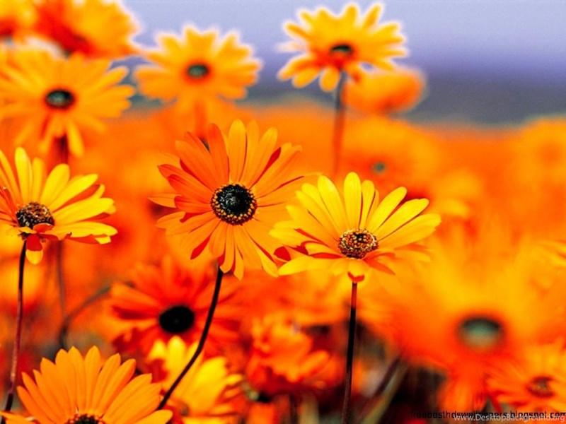 Awe Inspiring Screensavers Fall Flowers Desktop Background Download Free Architecture Designs Scobabritishbridgeorg