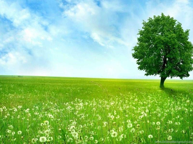 Download Green Tree Hd Wallpapers For Desktop Desktop Background