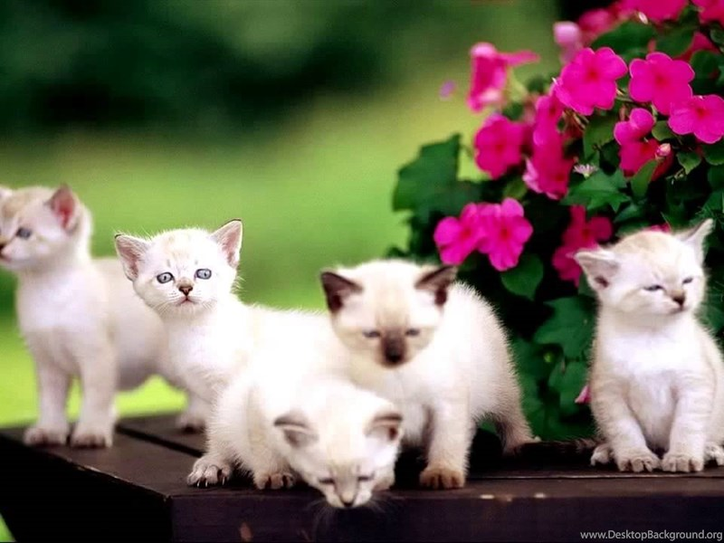 cute black and white kittens wallpapers part 3 desktop