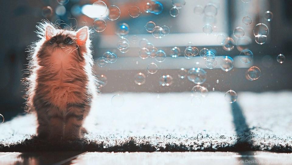 Cat Wallpaper For Pc 130807 1600x900 Desktop Background