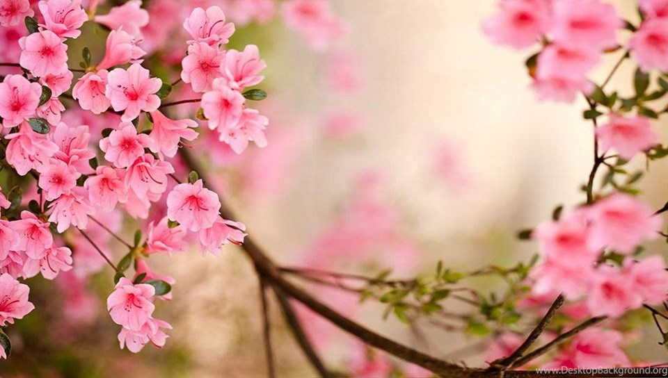 Spring Flowers Live Wallpapers In Cafe Bazaar For Android · Cafe