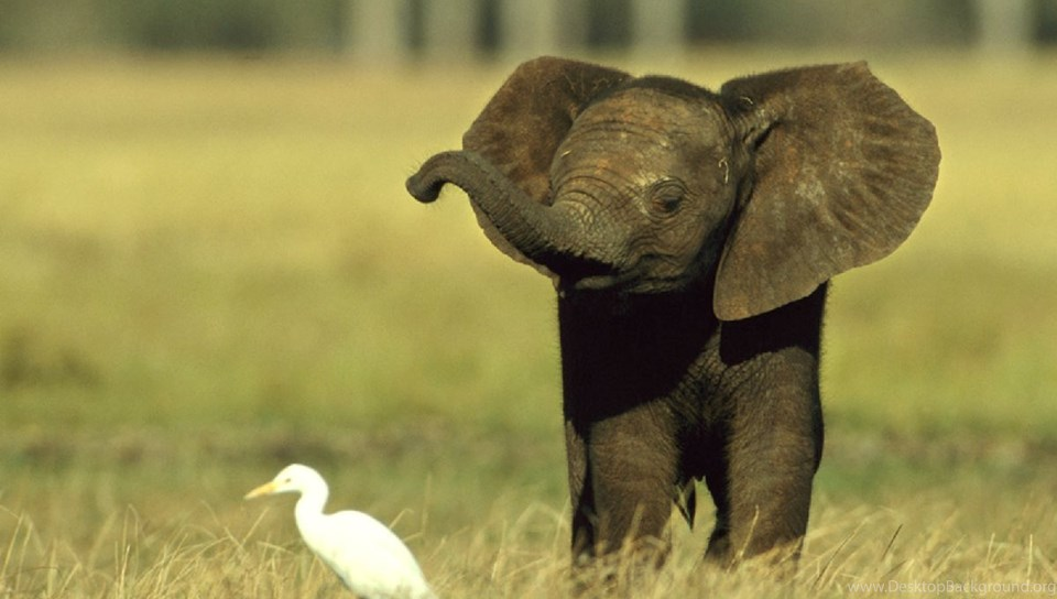 Cute Baby Elephant HD Wallpapers - Daily Backgrounds In HD ...