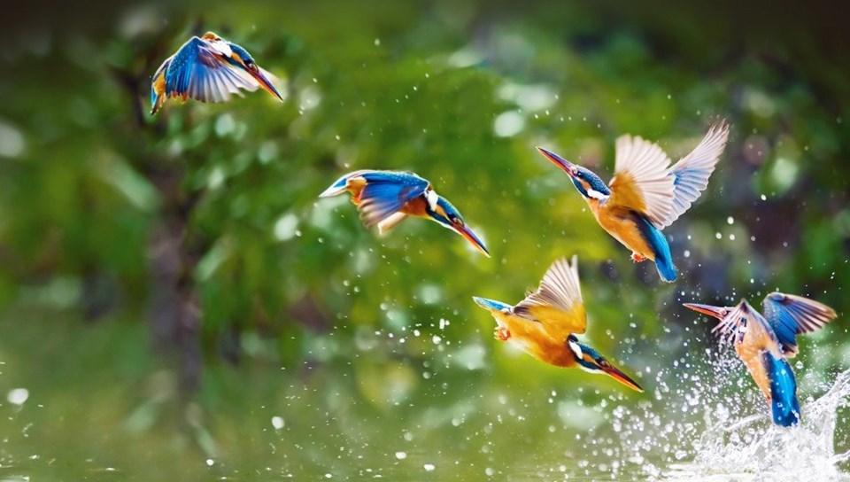 37 Love Birds Wallpapers Hd Free Download For Desktop Magazine Fuse Desktop Background