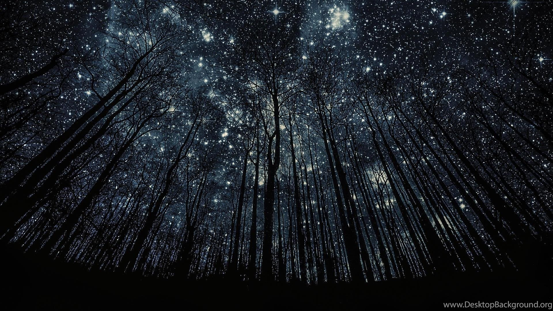 forest nigth full of stars hd wallpapers desktop background